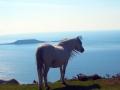horse-wales.jpg