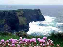 The Cliffs of Moher with sea pinks