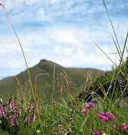 Wild Flowers Ireland