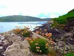 Kerry flora