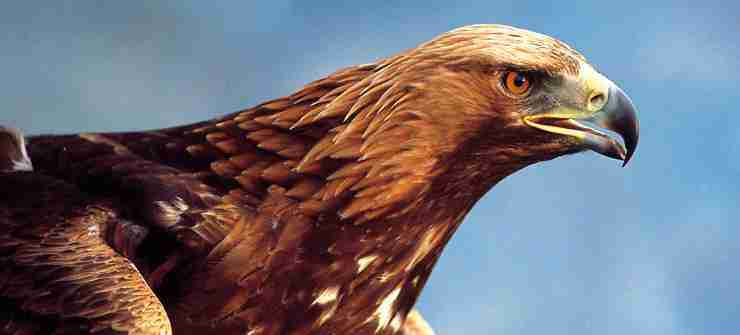 Highlands and Islands of Scotland - Scotland Highlands Tour - Eagle